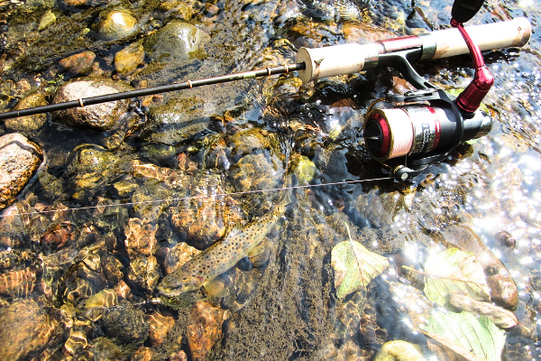 Best Spinning Rod and Reel Combo for Trout